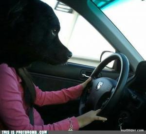 Pes řidič