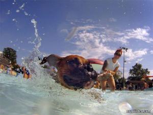 Pes vs. bazén
