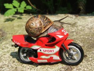 Šnek motorkář