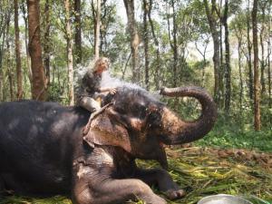Sloní sprcha
