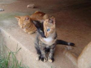 Kočka dvou tváří