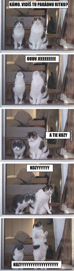 Kozyyy