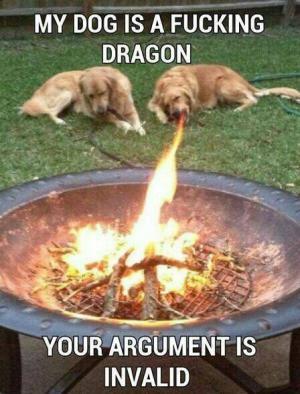 My dog is dragon!
