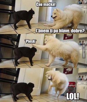 Čau kočko!