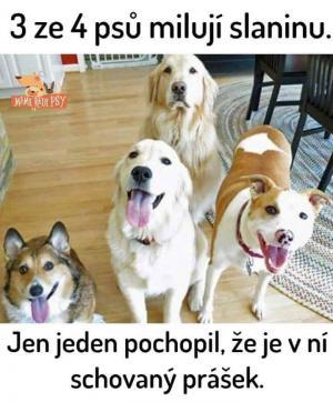 3 ze 4 psů