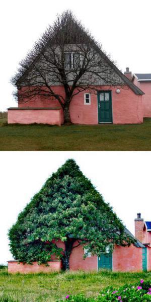 Strom vs. dům
