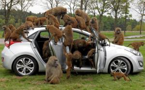 Invaze opičáků