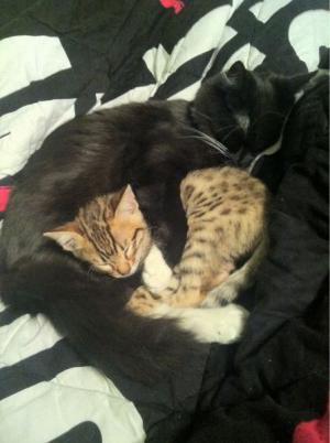 Kočičí odpočinek