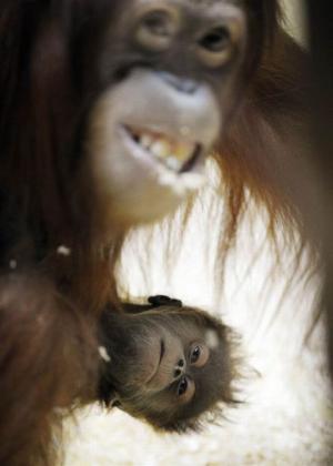 Opičí hrátky