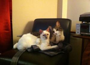 Kočičí pohodička