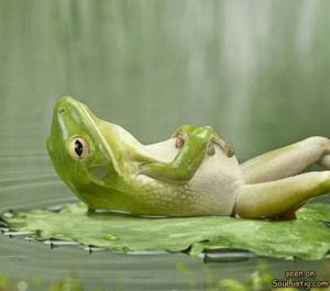 Odpočívající žába
