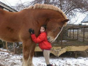 Koňská láska