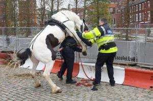 Nadržený kůň :-D