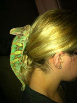 Sponka do vlasů