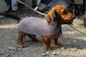 Pes rytíř