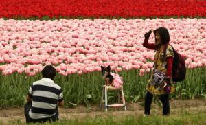 Květinová idylka