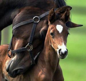 Koňská láska 2