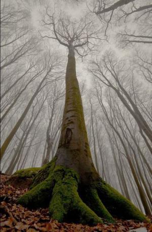Velký strom