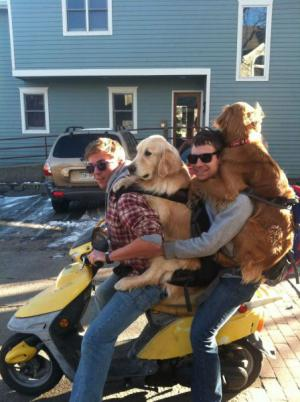Cestování se psi