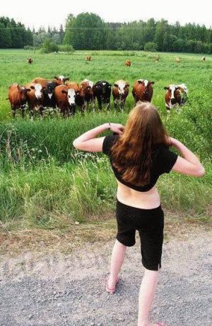 Koukejte krávy!