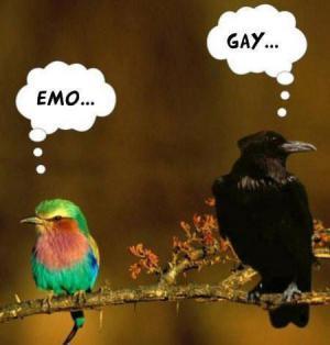 Názory ptactva