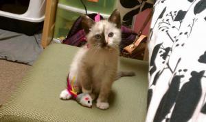 Zvědavá kočka 2