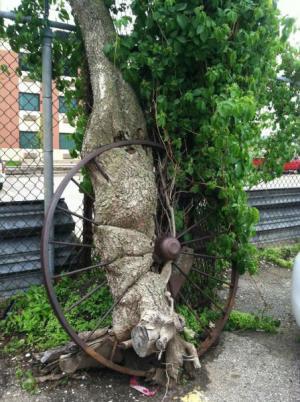Železo vs. strom