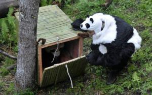 Vypouštění pandy