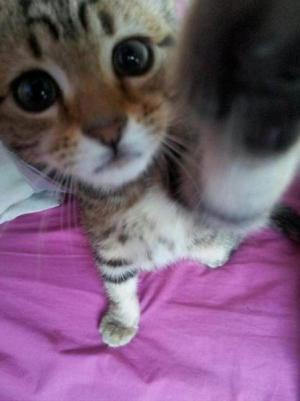 Zvídavá kočka