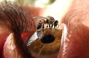 Vid včelky