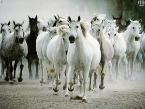 stádo koní ;´)