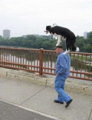 Venčení psa