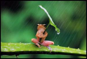 Žabí deštník
