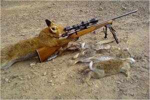 Moderní liška