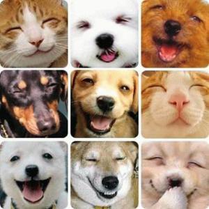 Obličeje koček a psů