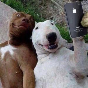 Psí selfie