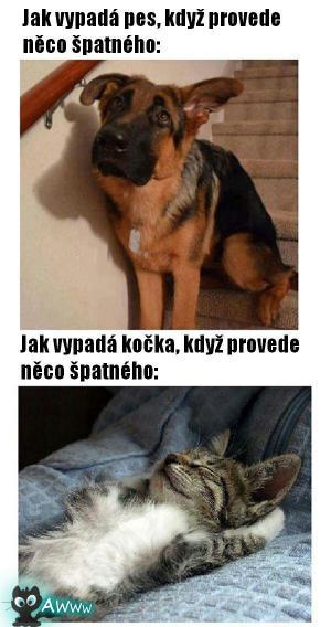 Rozdíl mezi psy a kočkami
