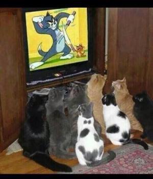 TV pořad pro kočky