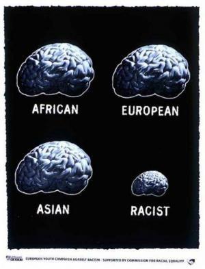 Srovnání mozků
