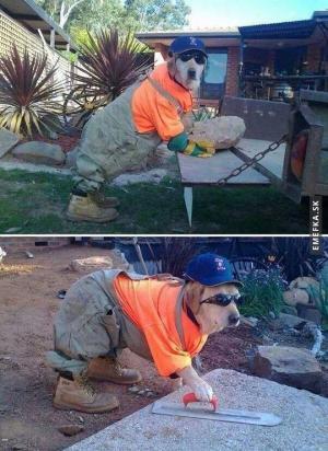 Zaměstnali radši psa než mě :/