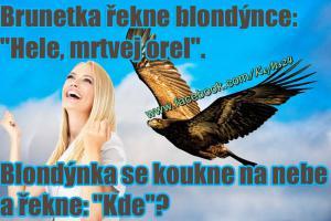 Brunetka a blondýna