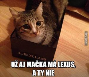 Kočka je na tom líp jak ty