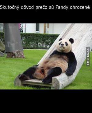 Proč jsou Pandy ohrožené