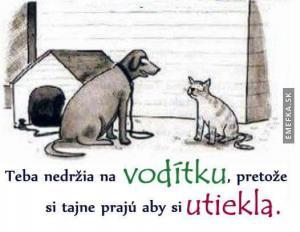 Chudák kočka:(