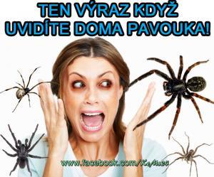 Pavouk