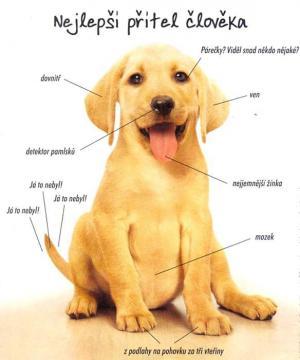 Nejlepší přítel člověka je pes