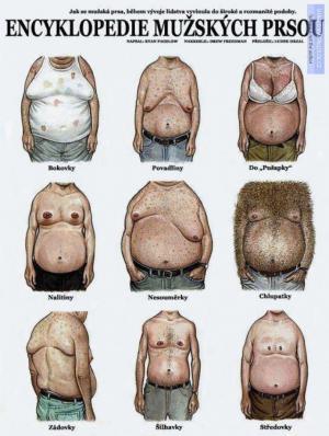 Encyklopedie mužských prsou