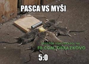 Past vs. myši :D