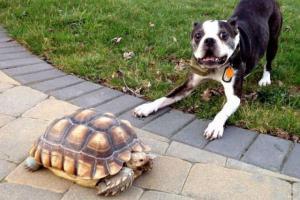 Strašidelná želva