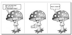Zhulená houba